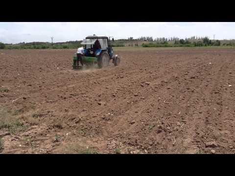 Voskehat NGO - Amaranth seeding Armenia - Ամարանտի ցանում