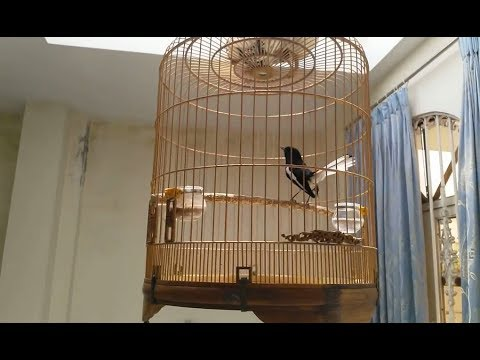 Birds Chirping In The Morning  Natural Sound of Birds