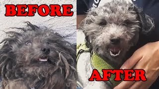 Rescued dogs transformations - Before and after compilation