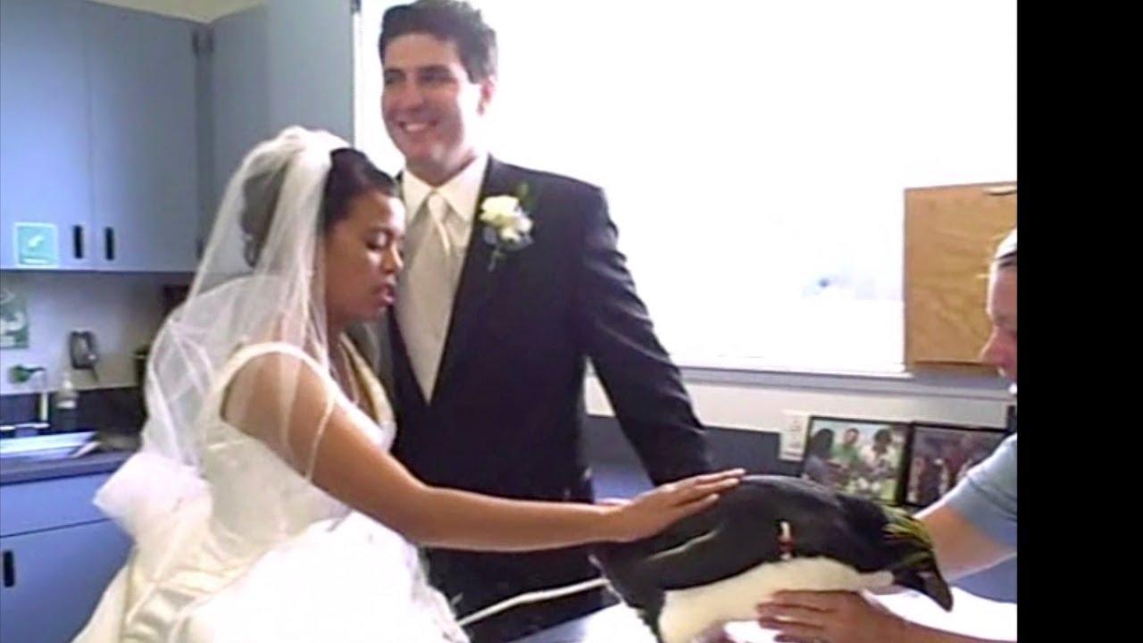 Penguin Pees On Bride! - YouTube