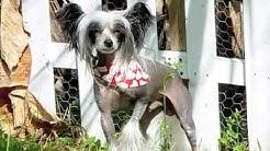 Fur People Pet Grooming Jacksonville Beach FL