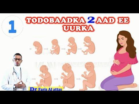 Download UURKA IYO TODOBAADKA 2AAD ISBADALADA DHACA (Qeybta1aad). Dr faris