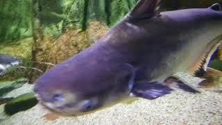 Документальный фильм о морских животных 2