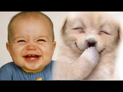 Funny Videos 2017 Babies Laughing At
