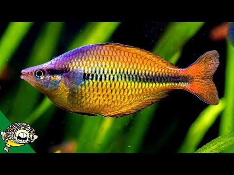 Rainbowfish Fish Room - Gary Lange - Aquarium Co-Op