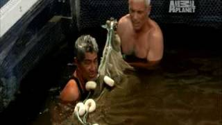 river monsters fish attack