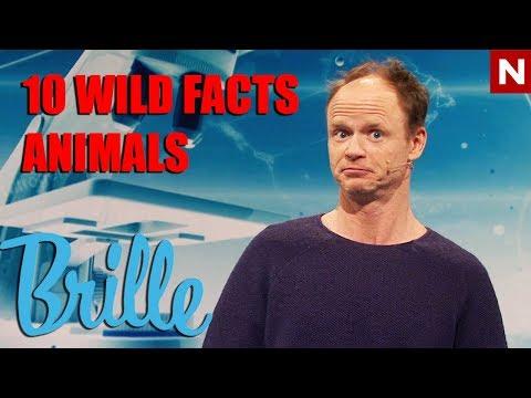 Brille | 10 ville fakta om dyr | TVNorge