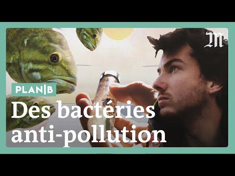 Des bactéries contre