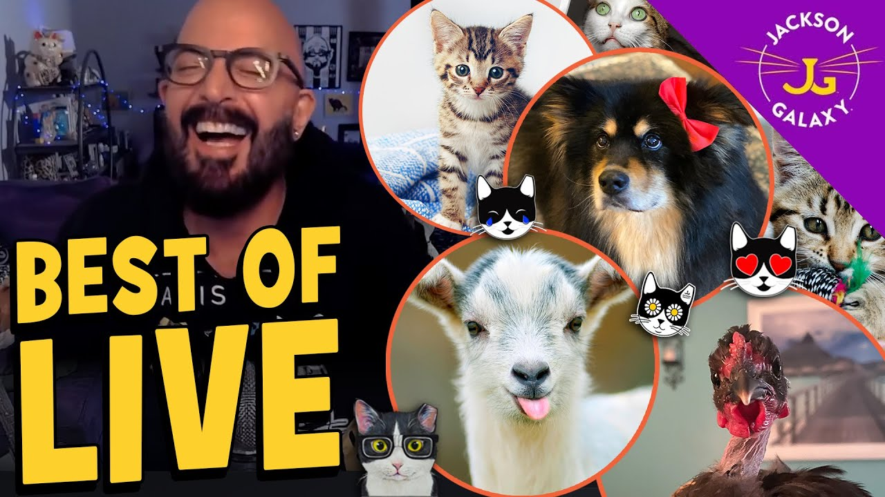 The Best & Funniest Moments LIVE from the Cat Cave