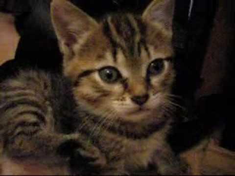 Chatons à Adopter : Debby&Théo (école Du Chat De Roubaix 59)