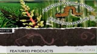 Home Worming Farm Tips and Worm Wee Fertilizer