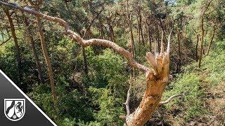 Waldbrand in Straelen: Drohnenaufnahmen zeigen die Schäden
