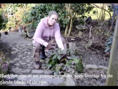 Påskeklokker I Marts Denfrodigehavedk Youtube