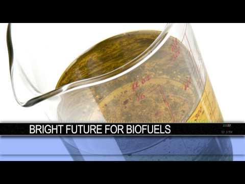 Airlines and Armed Services See a Bright Future in Biofuels