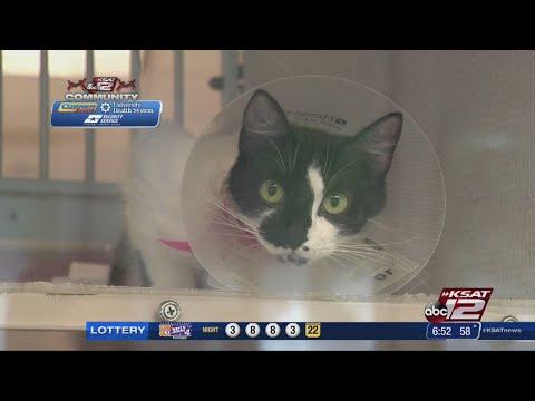 San Antonio Humane Society looking for boost from Big Give SA