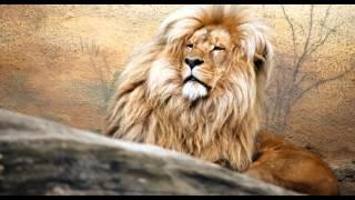 Звуки животных и птиц, для детей.  Лев, коала, петух.