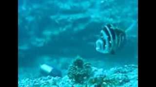 Armação de Pêra - Portugal's Biggest Natural Reef