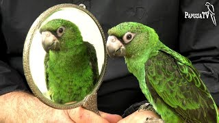 Lusterko dla papugi