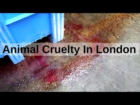 Animal Cruelty In London