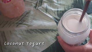 크리미한 코코넛요거트 만들기?  : 유제품프리 비건 홈…