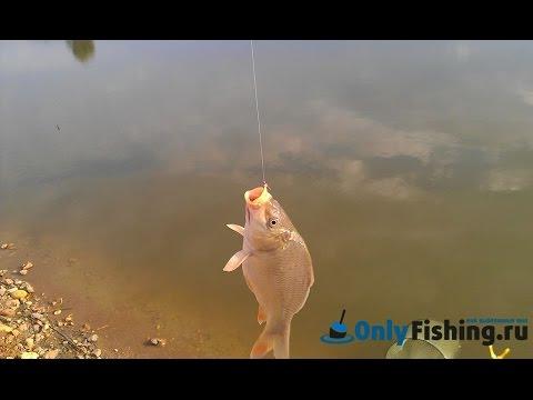 Раково. Платная рыбалка. Ловля карася. - YouTube