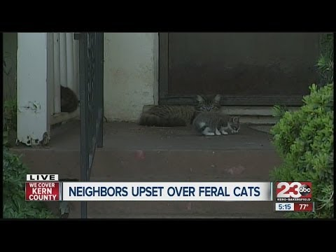 Homeowners upset that neighbors feed feral cats