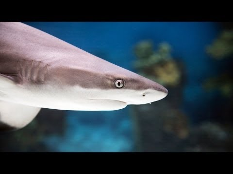 Best Sharks for a Home Fish Tank | Aquarium Care