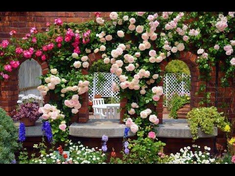 ЦВЕТЫ: СИНИЕ РОЗЫ. Blue roses flower