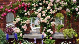 видео розы в ландшафтном дизайне