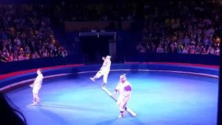 Акробаты в цирке Радуга