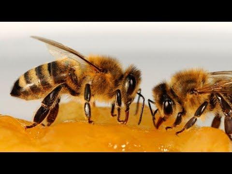 Вопрос: Как подкармливать пчёл осенью?