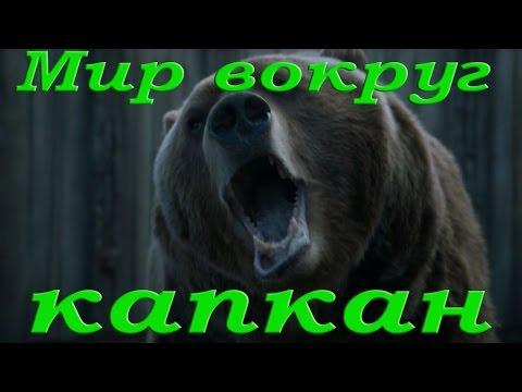 Освобождение медведя из капкана