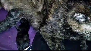 Однодневные подкидыши для мамы-кошки.