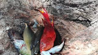 рыбалка и водка на Маврикий, странная рыба, Ильич на рыбалке