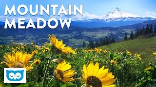 Relaxing Meadow and Mountain with Ambient Nature Sounds for Calming and Focus