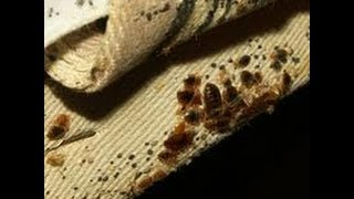 Bed Bug Infesting Apartments and Condos Middlesex and Milltown New Jersey 732-640-5488