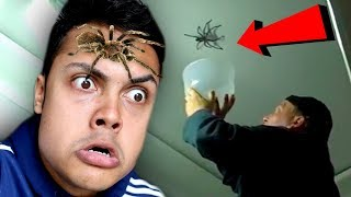 REACTING TO MY BIGGEST FEAR (PEST INFESTATIONS)