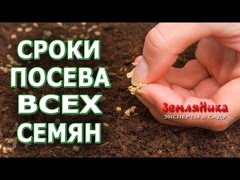 Сроки посева семян на рассаду всех культур на случай затяжной весны.