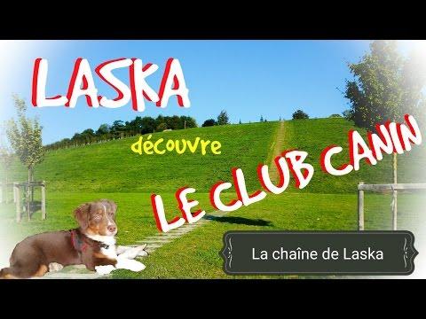 Laska découvre le club canin #20