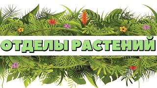 Ботаника.Многообразие растений.Основные отделы растений.