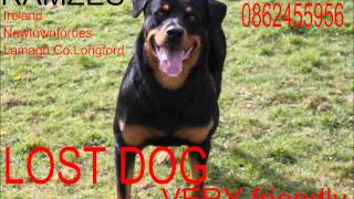 Lost Dog Rottweiler Please Share :(