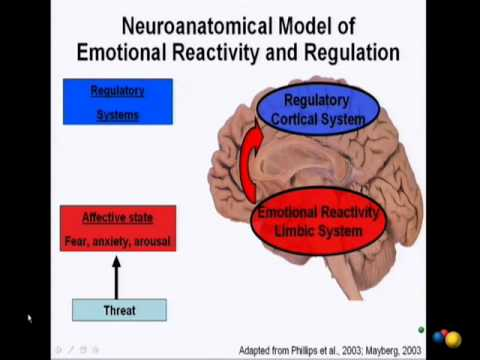 how music affects our brain emotions and bodies