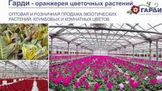Гарди - питомник растений и цветов(Питомник занимает площадь 42 гектара. Выращиваем и реализуем широкий ассортимент лиственных, хвойных дерев..., 2015-02-03T09:29:39.000Z)