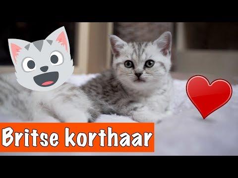 Super schattige kittens!!😍 | DierenpraatTV