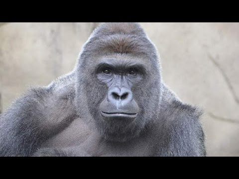 I Love You and I Miss You [Harambe Edition]