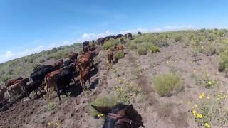 Convoyage de bétail - Colorado
