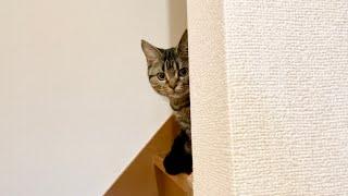 飼い主の帰宅を階段からチラ見しながら待ち続ける子猫w