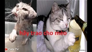cats tv | mèo thành tinh quậy phá thế giới - tik tok chó mèo 4k