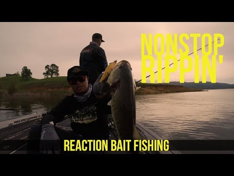 Reaction Bait Fishing for Bass Northern California Part 2