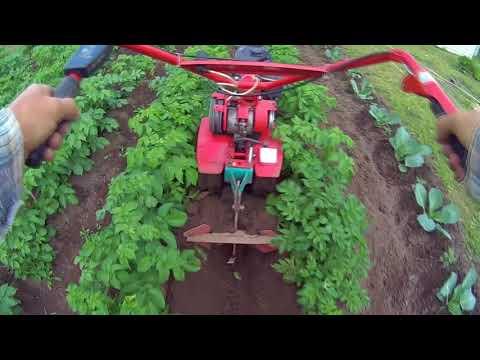 Как окучивать картошку мотоблоком видео